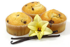 muffins βανίλια Στοκ Εικόνες