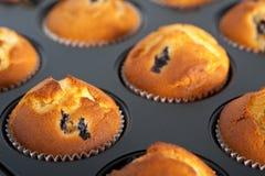 muffins δίσκος Στοκ Εικόνες