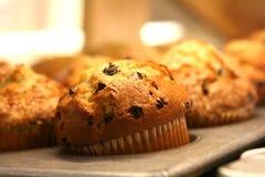 muffins καρότων κέικ Στοκ εικόνα με δικαίωμα ελεύθερης χρήσης