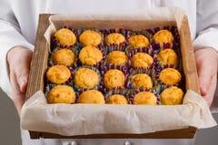Muffins καλαμποκιού στα χέρια του αρχιμάγειρα Στοκ Εικόνες