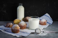 Muffins με την κονιοποιημένη ζάχαρη στοκ φωτογραφία
