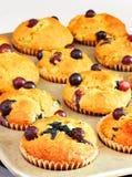 Muffins μπανανών βακκινίων Στοκ Εικόνα
