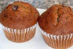 Muffins τσιπ σοκολάτας στοκ εικόνα