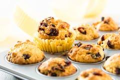 Muffins των βακκίνιων σε έναν muffin κασσίτερο Στοκ Εικόνα
