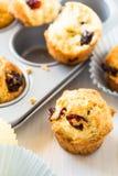 Muffins των βακκίνιων σε έναν muffin κασσίτερο Στοκ Φωτογραφία