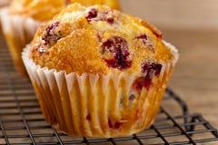 Muffins των βακκίνιων Στοκ Φωτογραφία