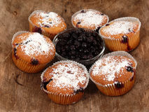 Free Muffins Royalty Free Stock Photos - 16990018