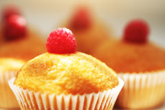 Muffins. On a light background Royalty Free Stock Photos
