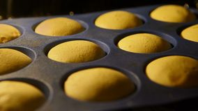 Muffins. Baking in oven. Time lapse footage of cooking Cupcakes. 4k, UHD
