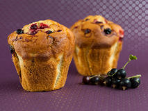 Muffins with black currants Royalty Free Stock Photos