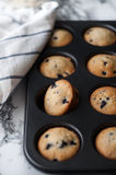 Muffins with blueberries. In baking dish Royalty Free Stock Image