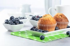 Muffins and blueberries on a kitchen table royalty free stock photos