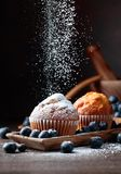 Muffins and blueberries sprinkled with powdered sugar royalty free stock photos