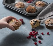 Muffins blueberry redberry homemade cake baked hand royalty free stock photo