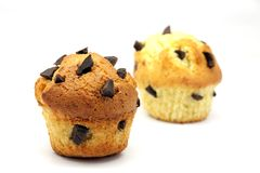 Muffins with chocolate. Two cupcakes with chocolate chips embedded on a white background royalty free stock photography