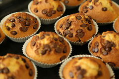 Muffins with chocolate chips on the baking tray Stock Photo