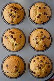 Muffins with chocolate drops Royalty Free Stock Images