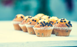 Muffins with chocolate drops Royalty Free Stock Photo