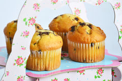 Muffins with chocolate on the stand Royalty Free Stock Photography