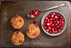 Muffins and Cranberries. Freshly baked cranberry muffins on a rustic baking pan with cranberries Royalty Free Stock Photo