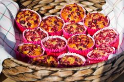 Muffins with cranberries. stock images