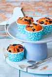 Muffins. Stock Photos