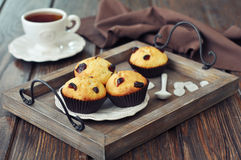 Muffins with dried cranberry Stock Photos