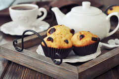 Muffins with dried cranberry Stock Image