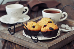 Muffins with dried cranberry Stock Photography