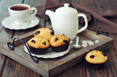 Muffins with dried cranberry Royalty Free Stock Photo