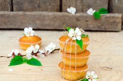 Muffins with filling Stock Images