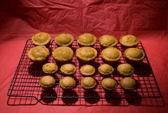Muffins 1. Fresh home baked muffins displayed on a wire bake rack Royalty Free Stock Images