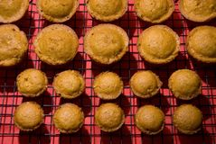 Muffins 2 Stock Photography