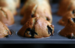 Muffins fresh from the oven Stock Photography