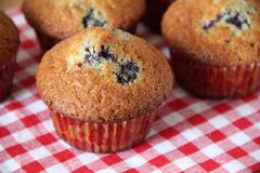 Muffins met een bosbes Royalty-vrije Stock Fotografie