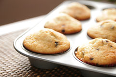 Muffins in a pan Royalty Free Stock Photo