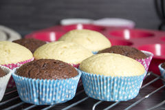 Muffins. Photo of some homemade muffins Royalty Free Stock Photography