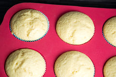 Muffins. Photo of some homemade muffins Stock Photos