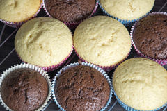 Muffins. Photo of some homemade muffins Royalty Free Stock Image