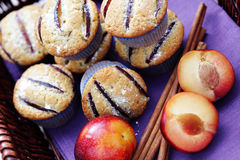 Muffins with plums stock photography