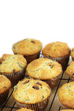 Muffins on a rack Royalty Free Stock Images