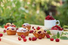 Muffins with raspberries are located on a wooden table on the background of green bushes. Stock Photo