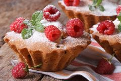 Muffins with raspberries, powdered with sugar horizontal Stock Photos