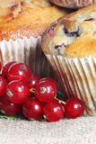 Muffins with red currants Royalty Free Stock Photography