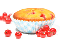 Muffins with red currants Stock Photography