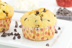 Muffins with ricotta cheese and chocolate chips Stock Image