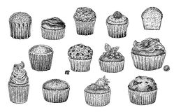 Muffins set Stock Photos