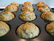 Muffins in tray Royalty Free Stock Image