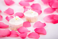 Muffins with white icing Stock Image
