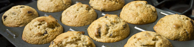 Muffins - wide view Stock Images
